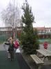 kerstboom bloemhof 005.JPG