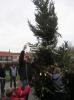 kerstboom bloemhof 009.JPG