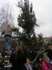 kerstboom bloemhof 011.JPG