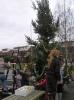 kerstboom bloemhof 010.JPG